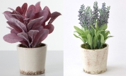 These beautiful decorative faux potted plants will make you think of traveling the European countryside. Provence, France, anyone? Available in green and purple rabbit ears, sage and lavender potted plants. $36